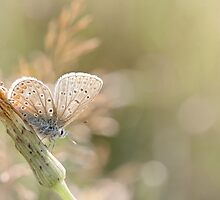 Sunbathing butterfly... by Bob Daalder