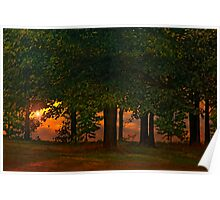 SUNSET THROUGH THE FOREST Poster