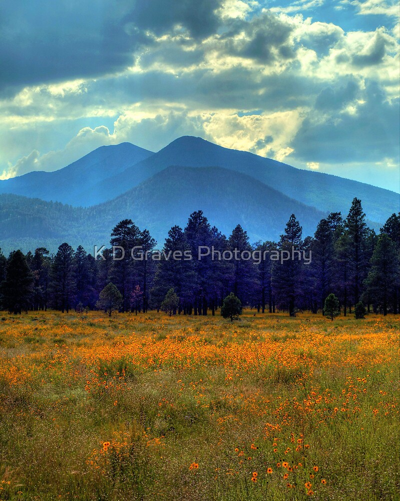 Yellow Fields Forever by K D Graves Photography