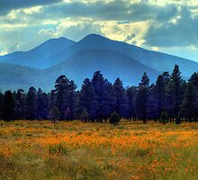 Yellow Fields Forever by Diana Graves Photography