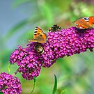 Bees and Butterflies On Buddleia by EvilTwin