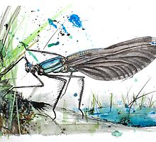 Damselfly by The Ink Art of Nicholas Swift