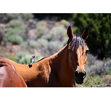 whats that on my back!!! Virginia City Highlands Virginia City Nevada USA Photographic Print