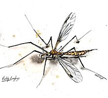 Daddy Longlegs by The Ink Art of Nicholas Swift