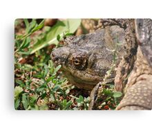 Snapping Turtle Head Metal Print