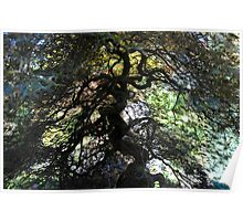 Mystery Trees - Vicortia Gardens Vancouver Poster