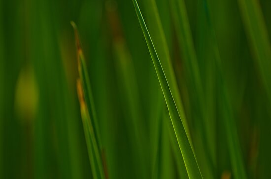 Slanted Green by photojeanic