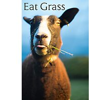 Eat Grass Photographic Print