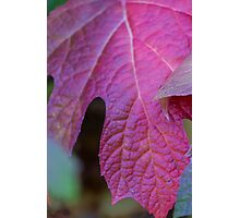 leaves in autumn Photographic Print