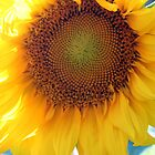 Sunflowers = Smiles by CcoatesPhotos