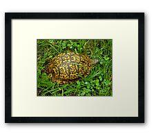 Eastern Box Turtle in Alabama Framed Print