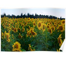 Sunflowers Side Poster