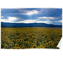 Sunflowers with Godlight Poster