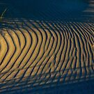 Tracks in Sand by pablosvista2