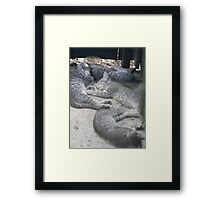 Contented Wild Kittens Framed Print