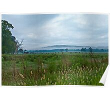 Cattle Farm in Early Morning Mist Poster