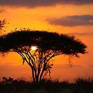Safari Sunrise  by Pippa Carvell