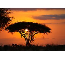 Safari Sunrise  Photographic Print