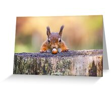 This red squirrel can't believe it's luck Greeting Card