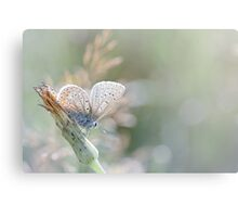 Sunbathing butterfly... (Blue version) Canvas Print