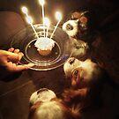 make a wish by Anthony Mancuso
