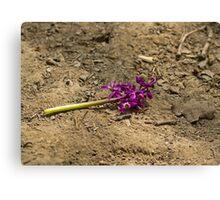 Early Purple Orchid Destruction Canvas Print