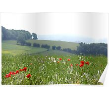 Poppies and Sea Mist Poster