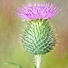 Textured Spear Thistle by Margaret S Sweeny