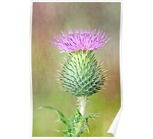 Textured Spear Thistle Poster
