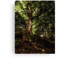 Sunlight on Bark.  Canvas Print