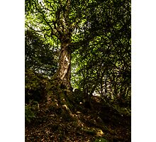 Sunlight on Bark.  Photographic Print