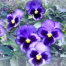 Pansies are Blue  by Sheri Nye