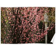 Flowering Plum and Birdhouse Poster