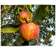 my orchard . . .  Poster