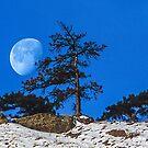 Moon Tree by nikongreg