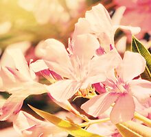 Floral Softness by ElleEmDee