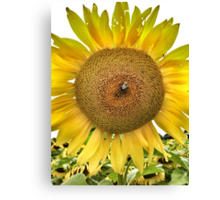 Pollen Harvest Canvas Print