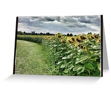Sunflower Trail Greeting Card