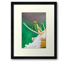 Waltz with a Flower  Framed Print