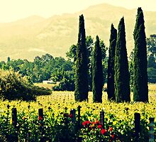 Vineyards 2 by ElleEmDee