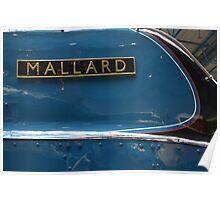 Mallard Poster