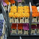 Flowers from Aalsmeer by bubblehex08