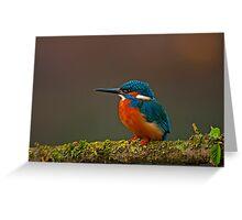 Male Kingfisher Greeting Card