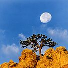Sanitas Moon Tree by Gregory J Summers