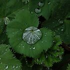 beautiful rain droplets by javier sepulveda