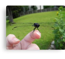 Making friends in the insect world Canvas Print