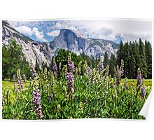 Wildflowers in Cook's Meadow, Yosemite Valley, California, USA Poster