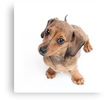 Dachshund Dance Canvas Print