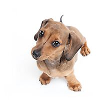 Dachshund Dance Photographic Print