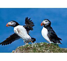 Puffin in Flight - Scotland Treshnish Isles Photographic Print